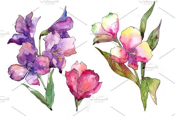 Colorful Alstroemeria PNG Watercolor