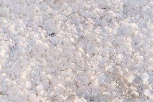 natural salt frozen in circles