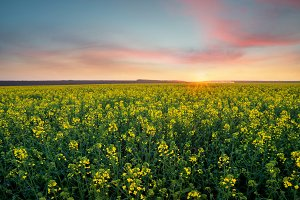 Agricultural landscape at the summer
