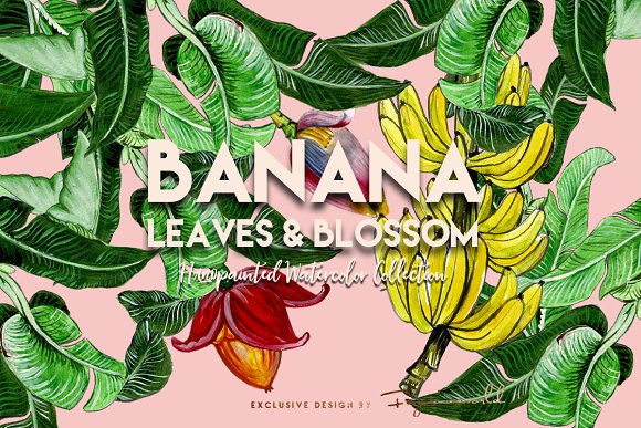 BANANA LEAVES AND BLOSSOM