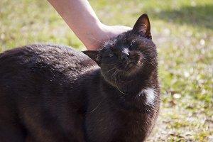 Farm Cat Petting