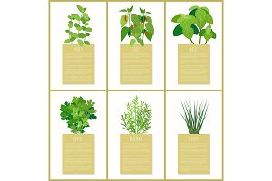 Natural Herbs Used in Culinary as Condiments Set