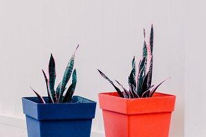 Minimal  Plants concept.  Plant love