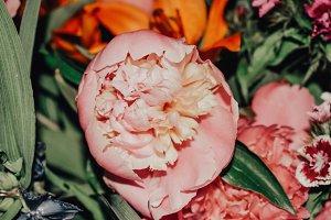 Pink Peonie flower