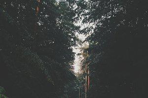 Rainforest in summer evening