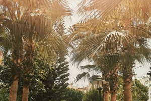 Palm trees in park ourdoor