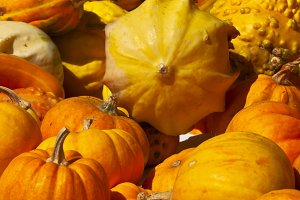 Orange and yellow pumpkins in a