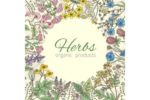 Medicinal, botanical and healing beauty herbs from garden. Background vector illustration