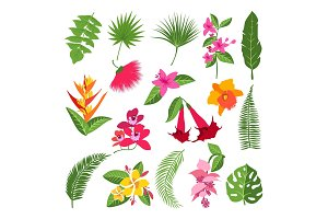 Exotic tropical flowers and leaves. Vector illustrations of plants