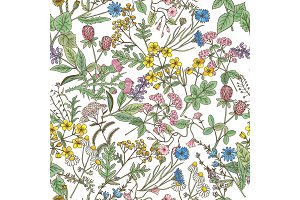 Hand drawn herbs background. Vector seamless pattern