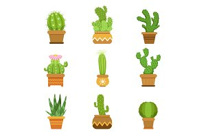 Decorative cactus in pots. Vector set. Desert plants isolate on white background