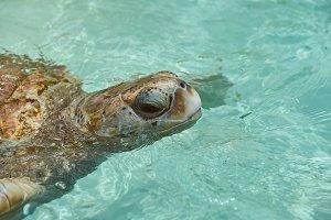 Portrait of turtle in water