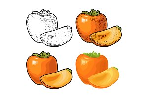 Whole and half persimmon. Vector engraving and flat color illustration
