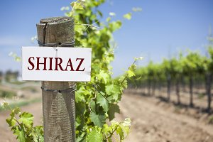 Shiraz Sign On Post in Vineyard