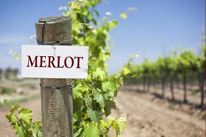 Merlot Sign On Post in Vineyard