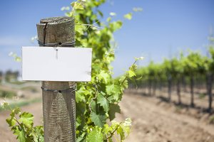 Grape Wine Vineyard with Wooden Post