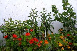 A corner in the garden