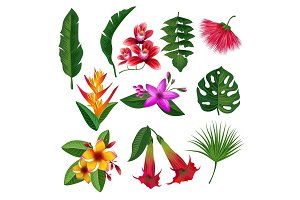 Tropical plants hawaii flowers leaves and branches. Vector illustration isolate on white background