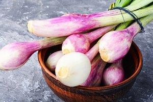 Fresh onion bulbs