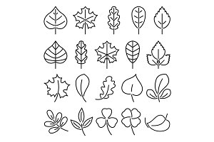 Leaf icon set. Linear vector illustration isolate on white background. Natural autumn plants. Pictures for logo design
