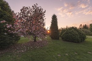 Sunset at the Cherry Tree
