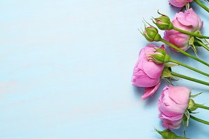 Pink roses on blue table