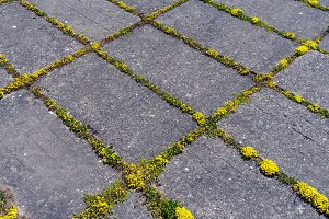 Yellow moss between concrete slabs