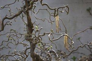 Budding plant at Springtime