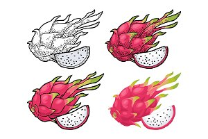 Dragon fruit whole and slice. Vector vintage engraving and flat color