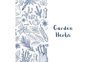 Vector hand drawn herbs and spices background with place for text illustration