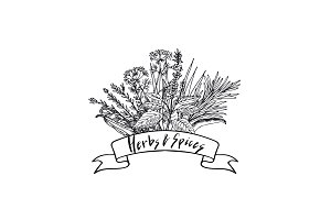 Vector hand drawn herbs and spices in bouquet