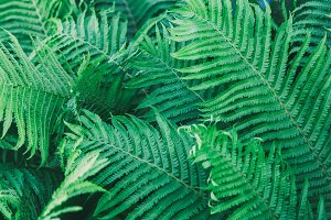 Natural background with fern leaves