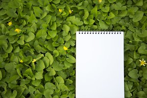 The notebook lies in the greenery.