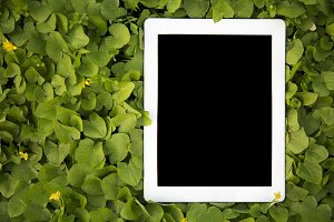 Tablet lies in the greenery. Closeup