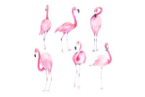 Set Watercolor Flamingos