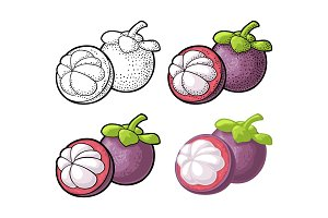 Whole and half mangosteen. Vector vintage engraving and flat