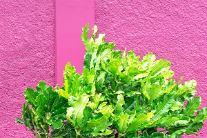 Plants on pink wall background.