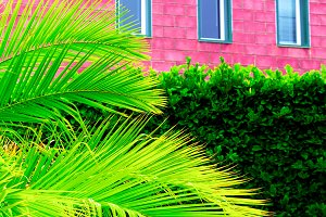 Tropical vibes. Palm on pink wall ba