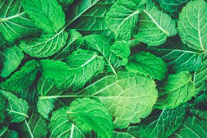 Texture of green peppermint leaves. Background, postcard.