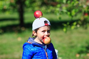 Cute boy has fun in apple orchard
