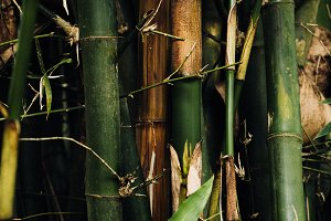green bamboo stalks and bamboo leave