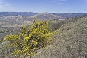 Blossoming dogwood in mountains