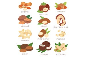 Nut vector nutshell of hazelnut or walnut and almond nuts set nutrition with cashew peanut and chestnuts nutmeg illustration isolated on white background