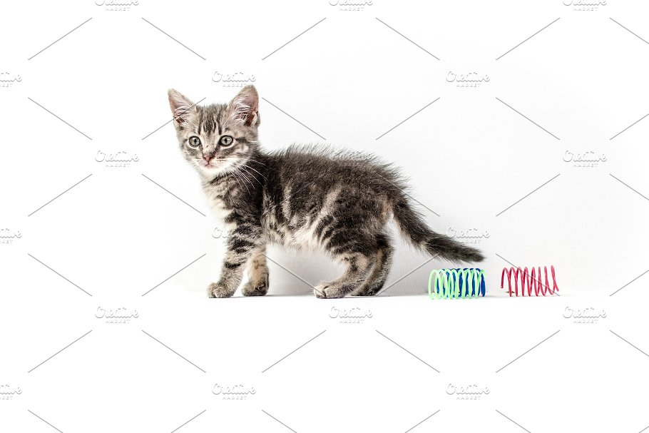 cute small baby silver tabby cat animal photos creative market