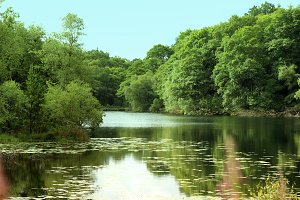 Lily Pond Forest Trees Reflection
