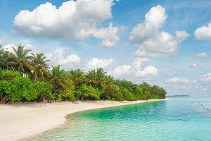 Tropical island beach palm trees