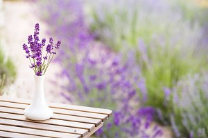 Lavender flower composition.