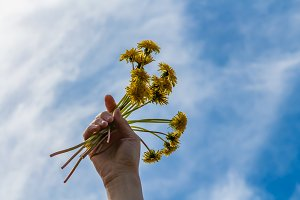 A woman's right hand with yellow dandelions