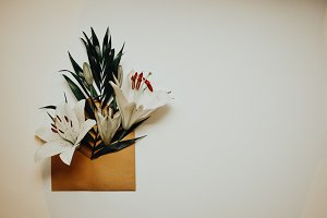 Flower in envelope on the white back