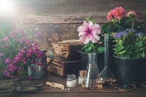 Seedling of flowers, homeopathy drug